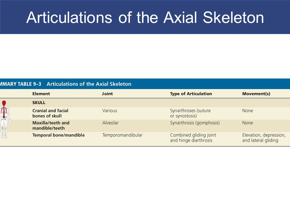 Articulations of the Axial Skeleton