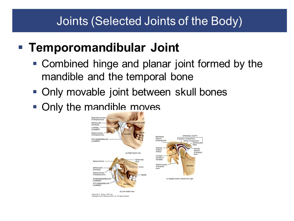 Joints (Selected Joints of the Body)