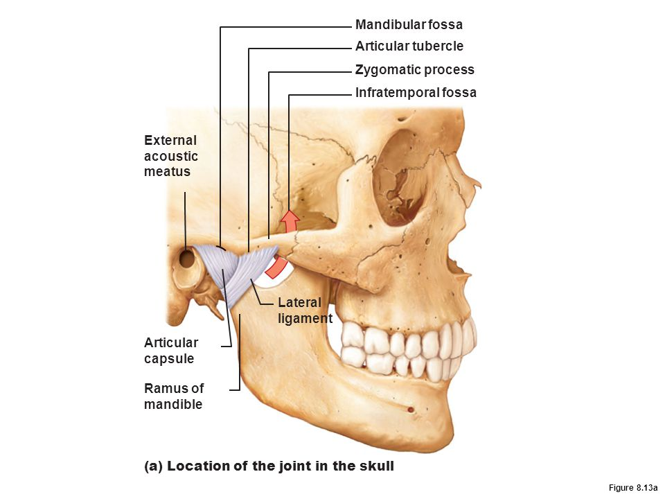 (a) Location of the joint in the skull