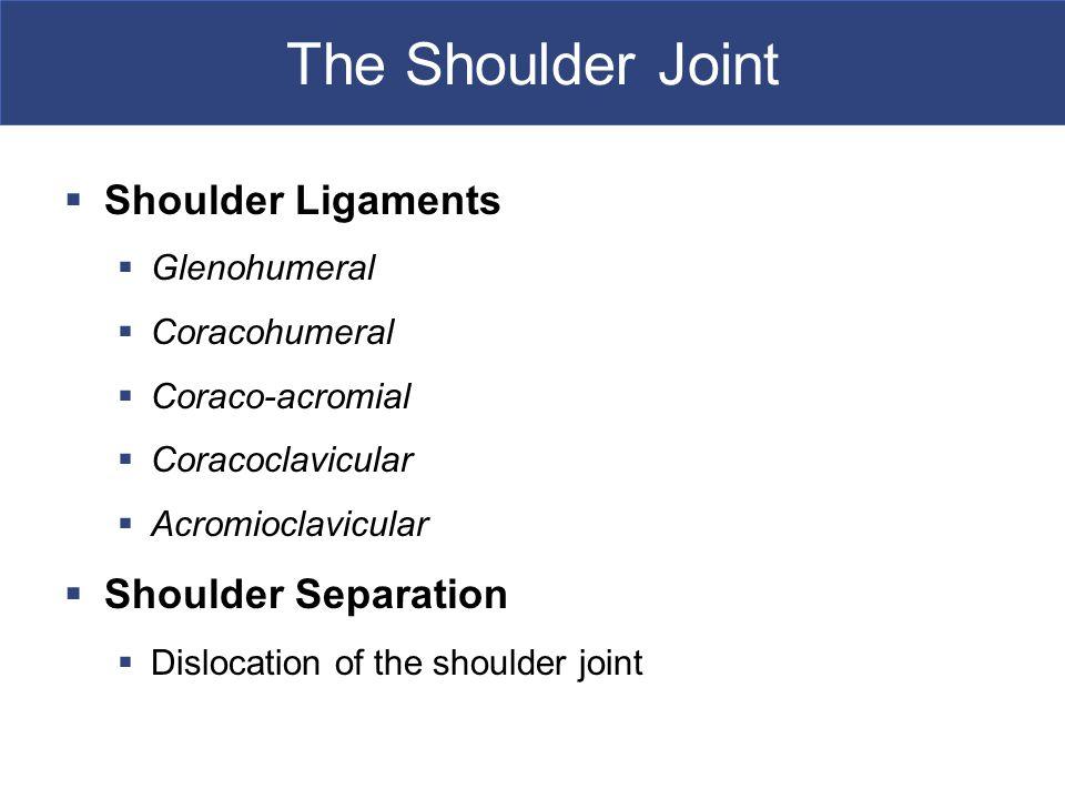 The Shoulder Joint Shoulder Ligaments Shoulder Separation Glenohumeral