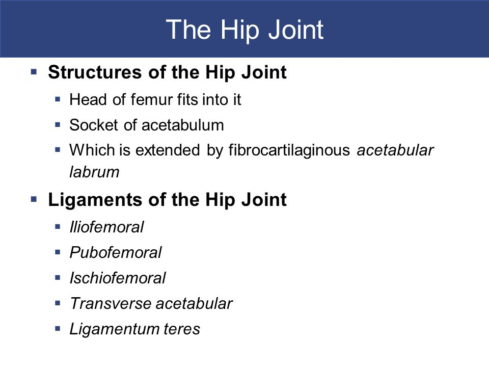 The Hip Joint Structures of the Hip Joint Ligaments of the Hip Joint