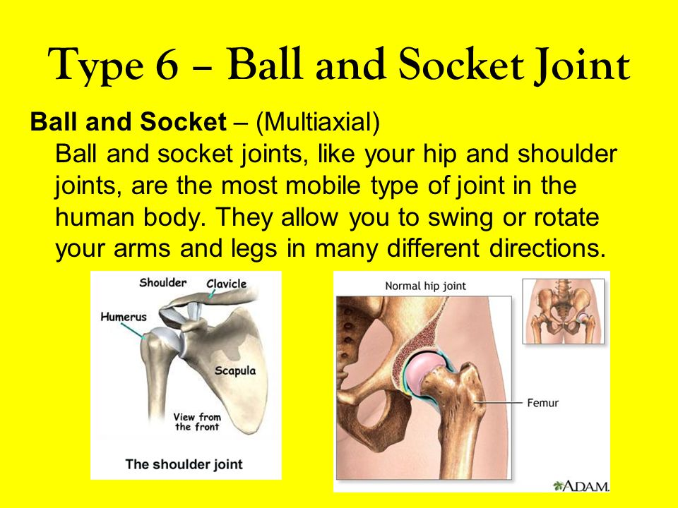 Type 6 – Ball and Socket Joint