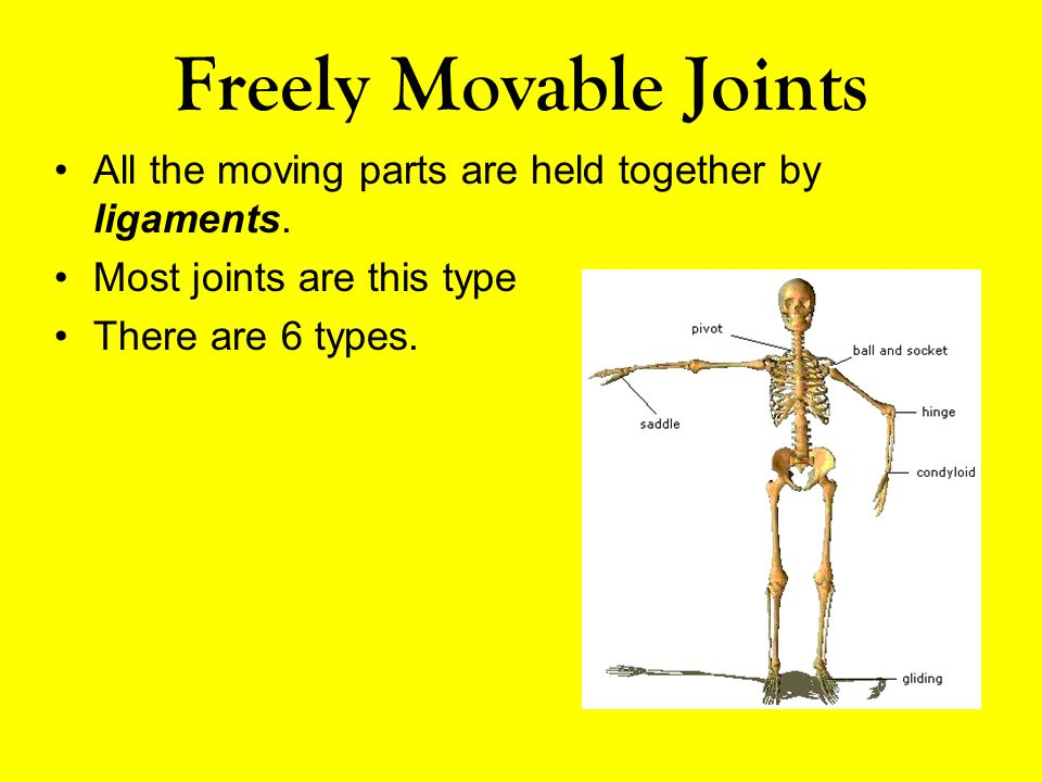 Freely Movable Joints All the moving parts are held together by ligaments. Most joints are this type.