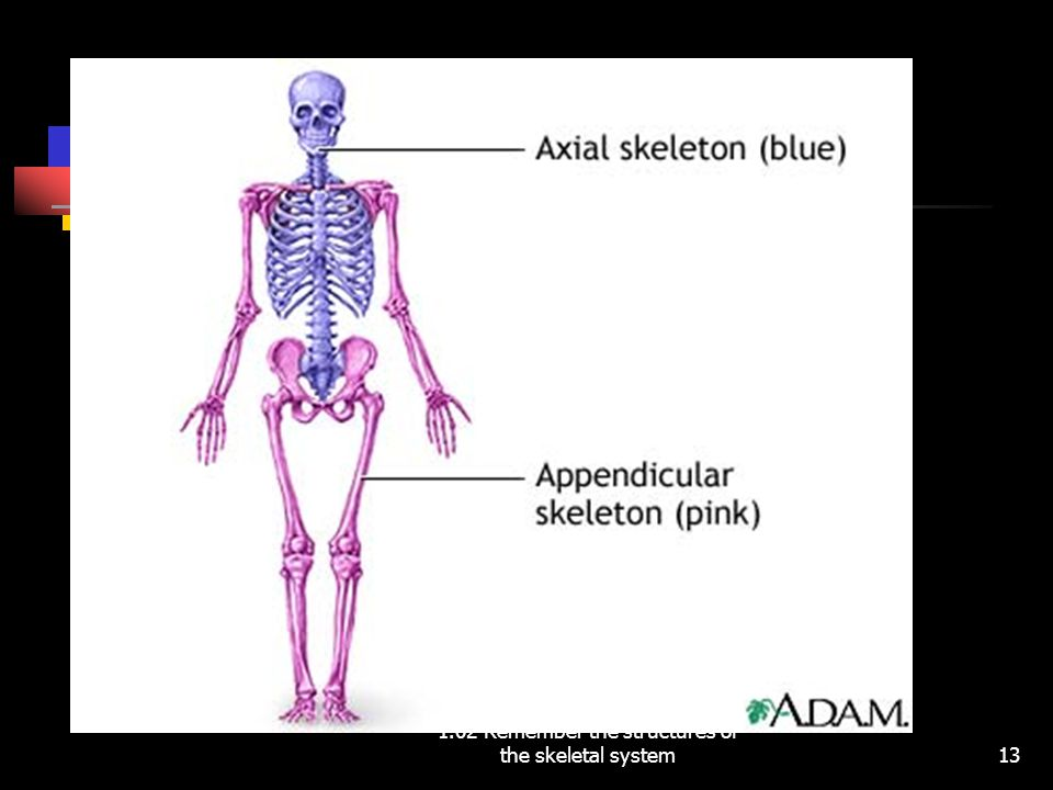 1.02 Remember the structures of the skeletal system