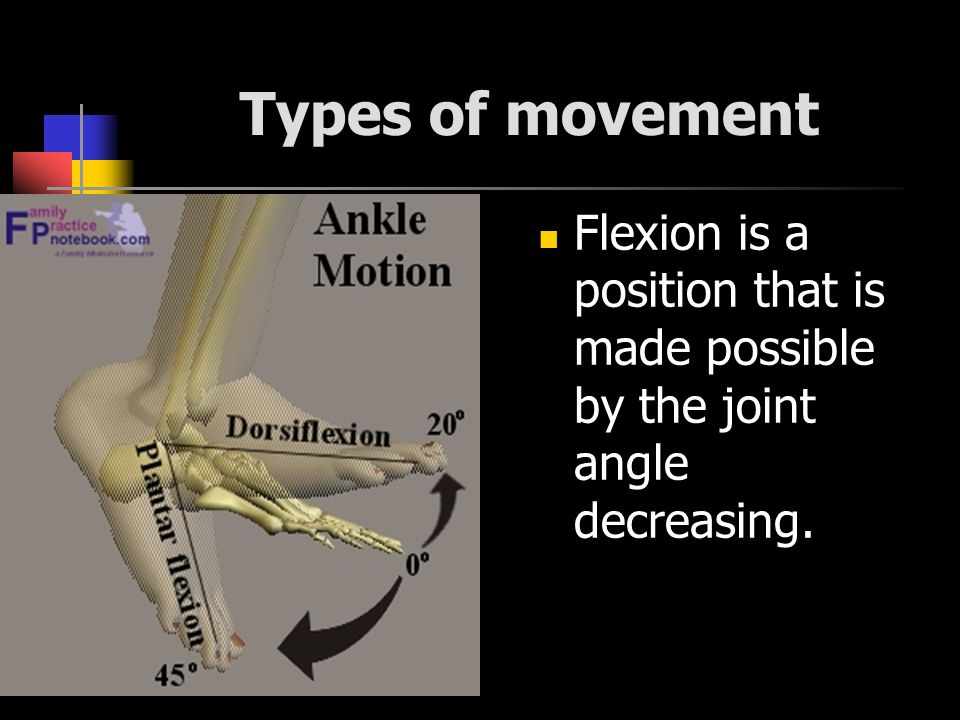 Types of movement Flexion is a position that is made possible by the joint angle decreasing.