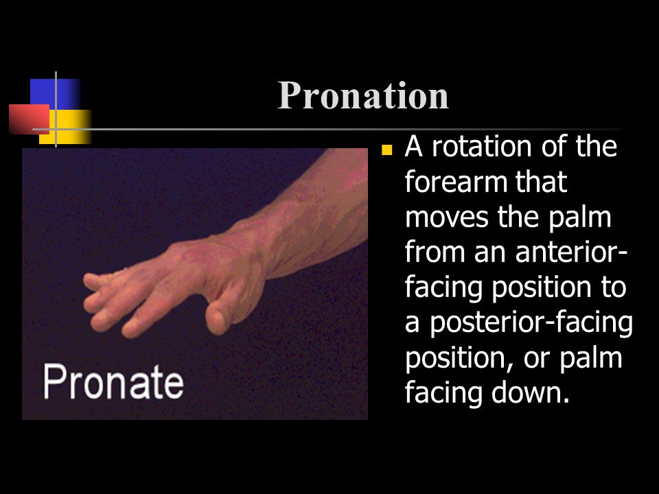 Pronation A rotation of the forearm that moves the palm from an anterior-facing position to a posterior-facing position, or palm facing down.