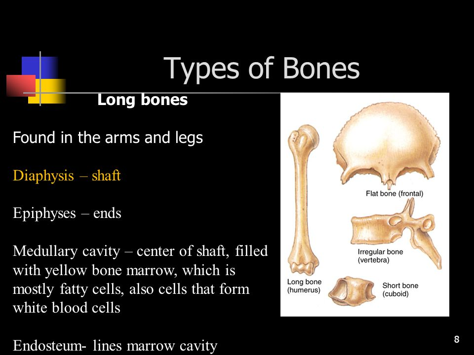 Types of Bones Long bones Found in the arms and legs Diaphysis – shaft
