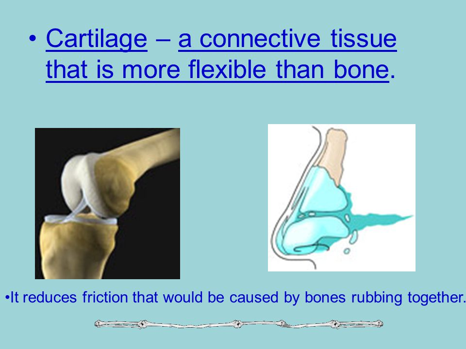Cartilage – a connective tissue that is more flexible than bone.