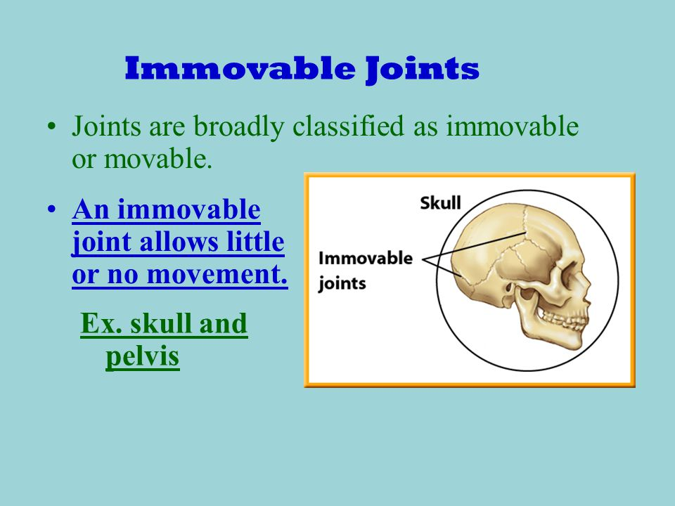 Immovable Joints Joints are broadly classified as immovable or movable. An immovable joint allows little or no movement.