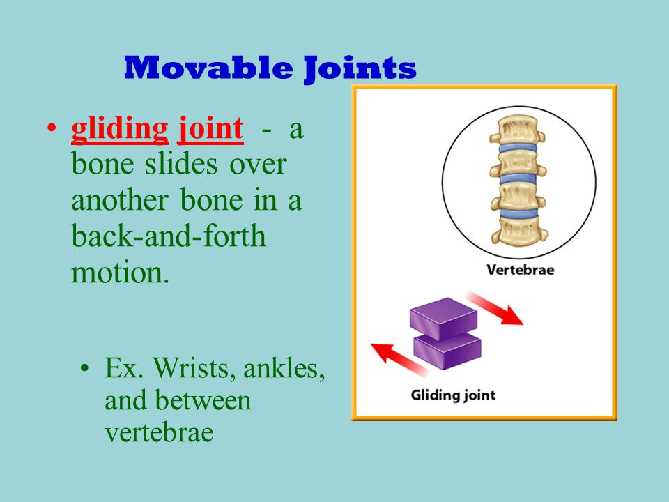 Movable Joints gliding joint - a bone slides over another bone in a back-and-forth motion.