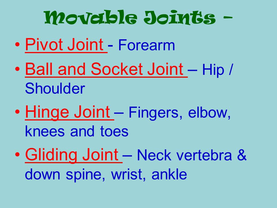 Movable Joints – Pivot Joint - Forearm. Ball and Socket Joint – Hip / Shoulder. Hinge Joint – Fingers, elbow, knees and toes.