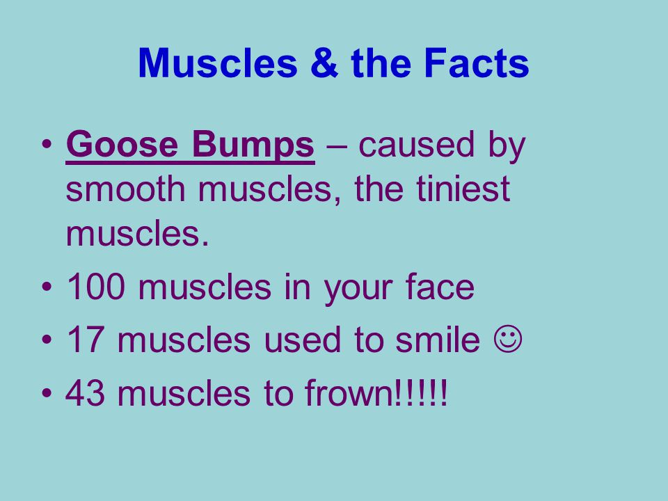 Muscles & the Facts Goose Bumps – caused by smooth muscles, the tiniest muscles. 100 muscles in your face.