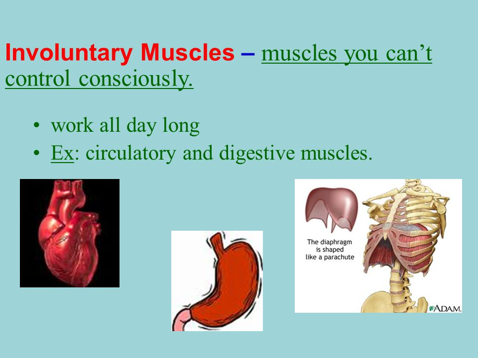 skeletal system, muscular system, & the skin - ppt download, Human Body