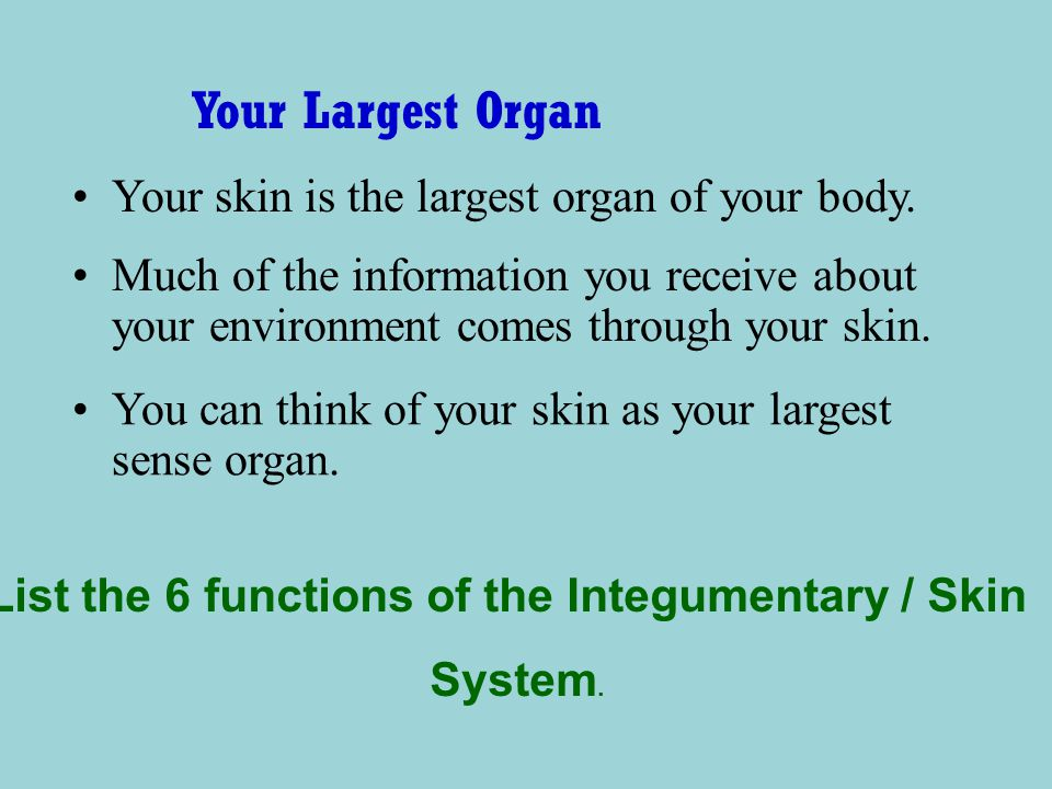List the 6 functions of the Integumentary / Skin