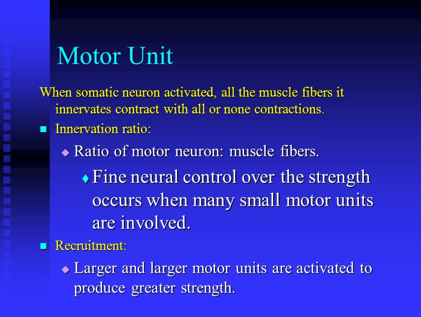 Motor Unit When somatic neuron activated, all the muscle fibers it innervates contract with all or none contractions.
