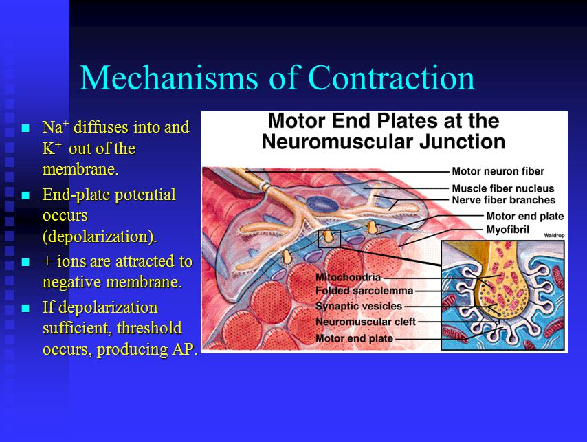 Mechanisms of Contraction