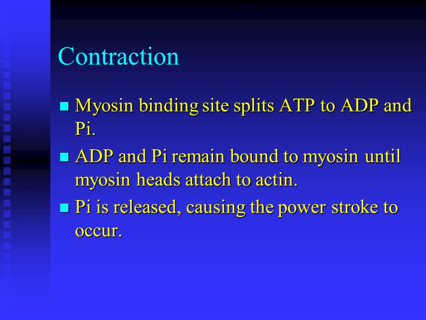 Contraction Myosin binding site splits ATP to ADP and Pi.