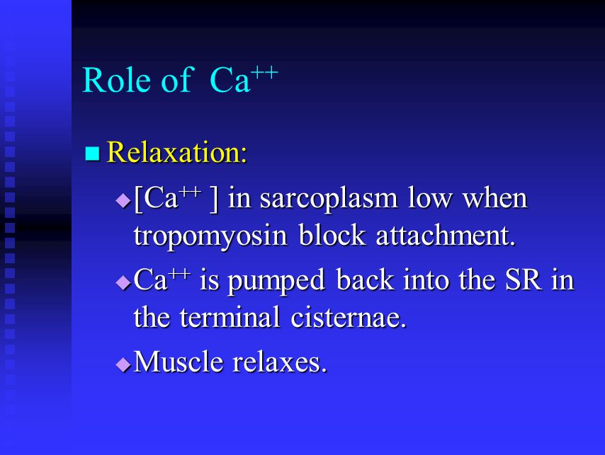 Role of Ca++ Relaxation: