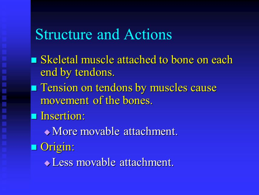 Structure and Actions Skeletal muscle attached to bone on each end by tendons. Tension on tendons by muscles cause movement of the bones.