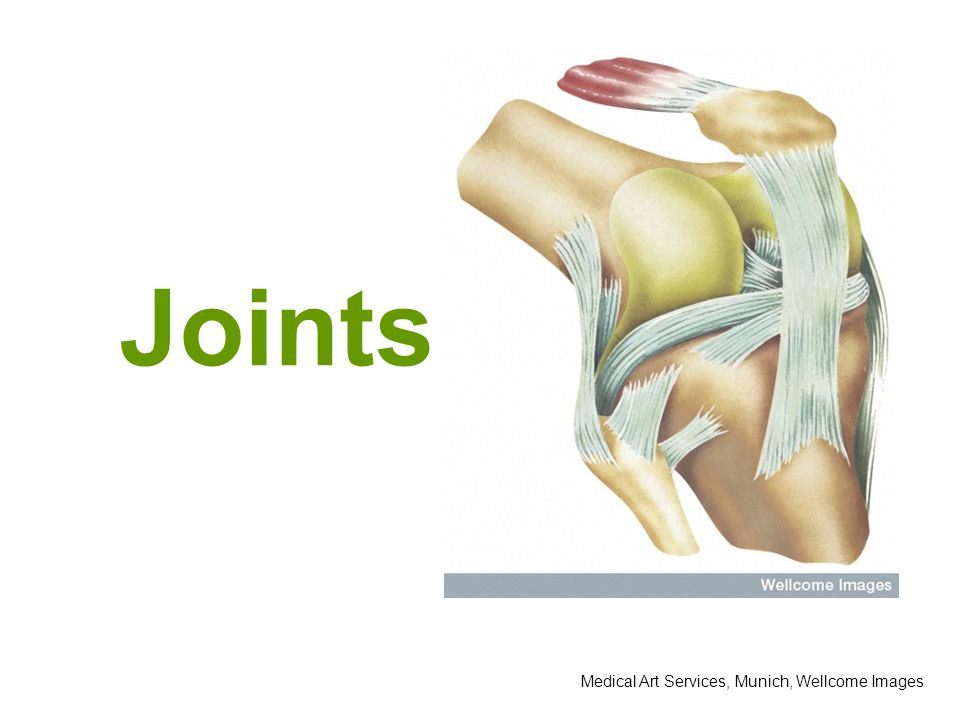 Joints Medical Art Services, Munich, Wellcome Images