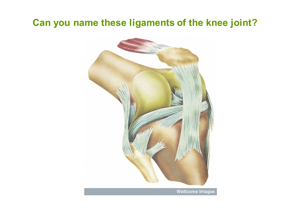 Can you name these ligaments of the knee joint
