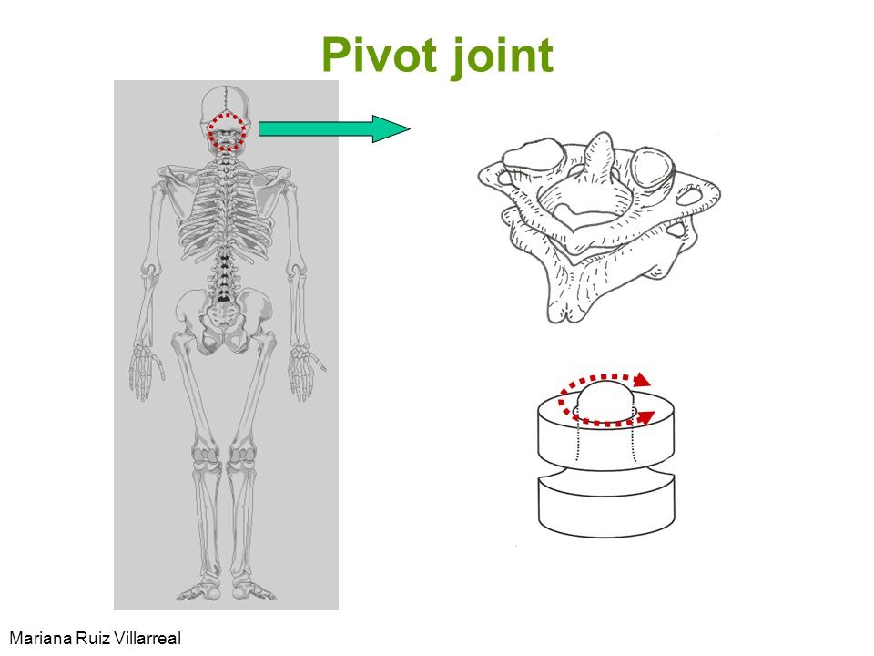 Pivot joint Mariana Ruiz Villarreal