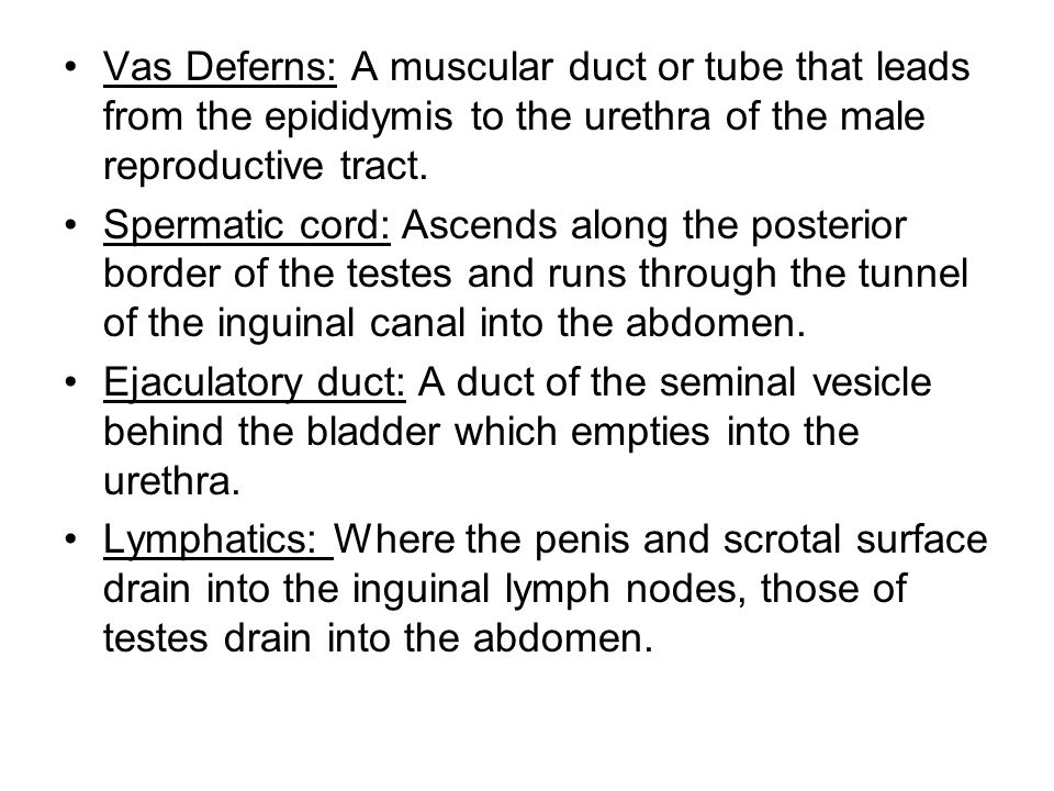 Vas Deferns: A muscular duct or tube that leads from the epididymis to the urethra of the male reproductive tract.