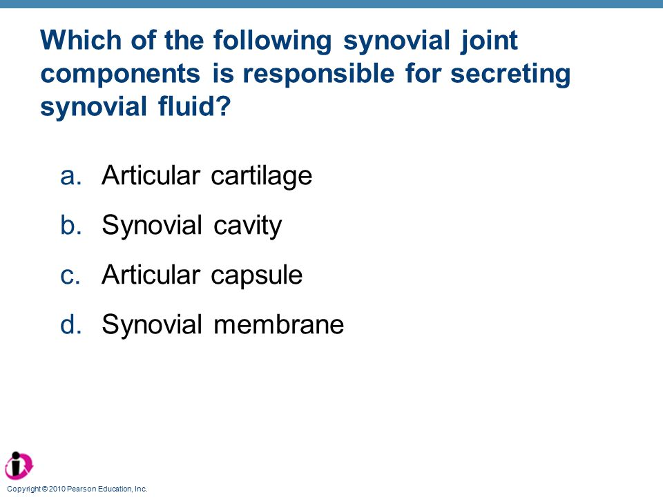 Which of the following synovial joint components is responsible for secreting synovial fluid