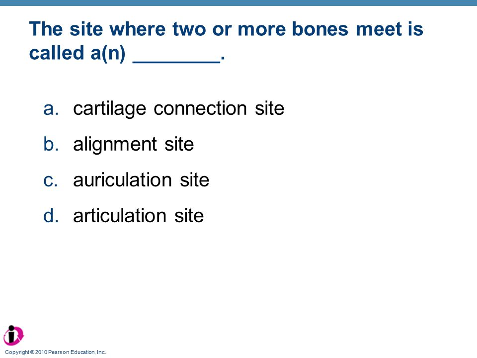 The site where two or more bones meet is called a(n) ________.