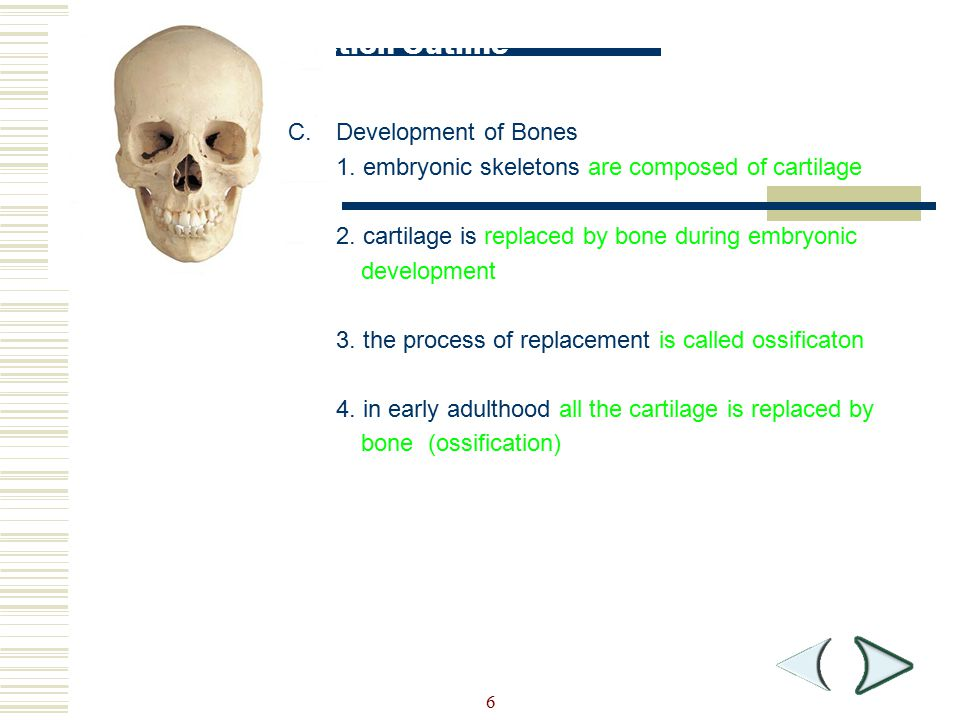 Section Outline Development of Bones