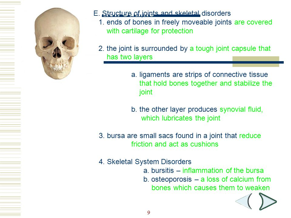 Section Outline E. Structure of joints and skeletal disorders