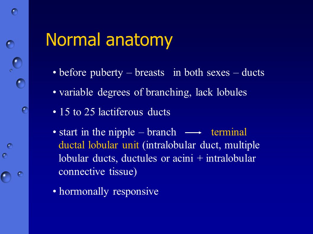 Normal anatomy before puberty – breasts in both sexes – ducts