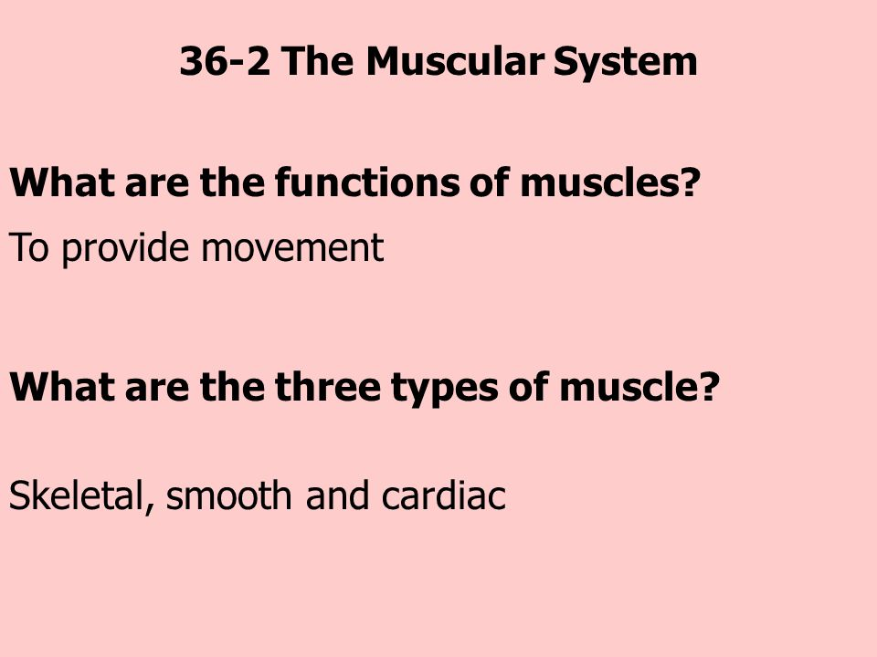 36-2 The Muscular System What are the functions of muscles To provide movement. What are the three types of muscle