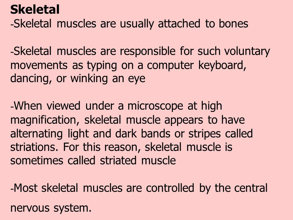 Skeletal -Skeletal muscles are usually attached to bones -Skeletal muscles are responsible for such voluntary movements as typing on a computer keyboard, dancing, or winking an eye -When viewed under a microscope at high magnification, skeletal muscle appears to have alternating light and dark bands or stripes called striations.