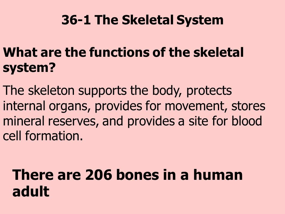 There are 206 bones in a human adult