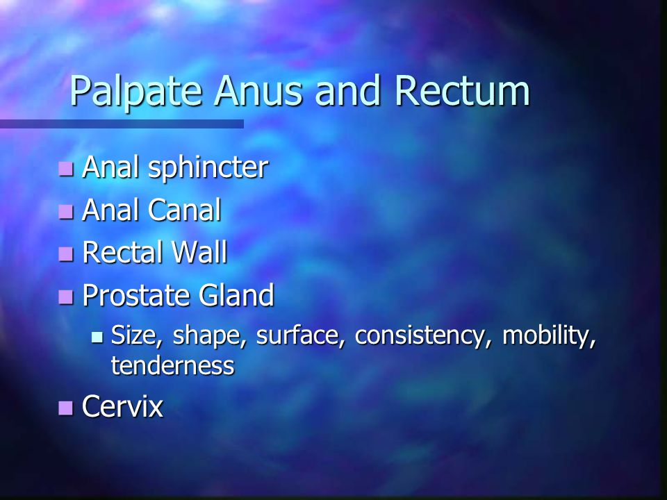 Palpate Anus and Rectum