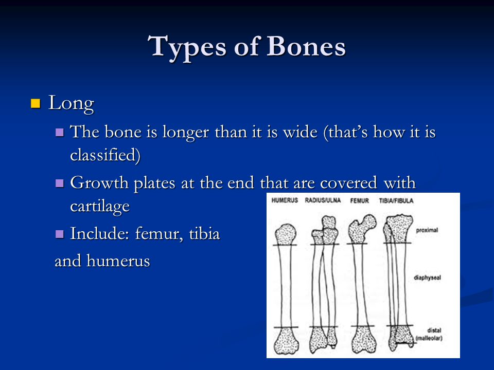 Types of Bones Long. The bone is longer than it is wide (that's how it is classified) Growth plates at the end that are covered with cartilage.