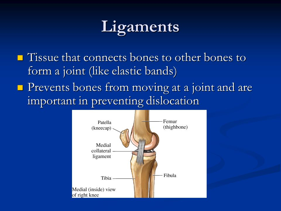 Ligaments Tissue that connects bones to other bones to form a joint (like elastic bands)