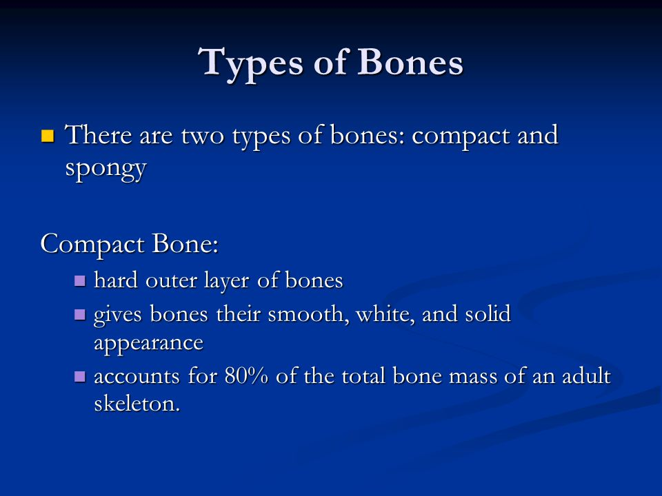 Types of Bones There are two types of bones: compact and spongy
