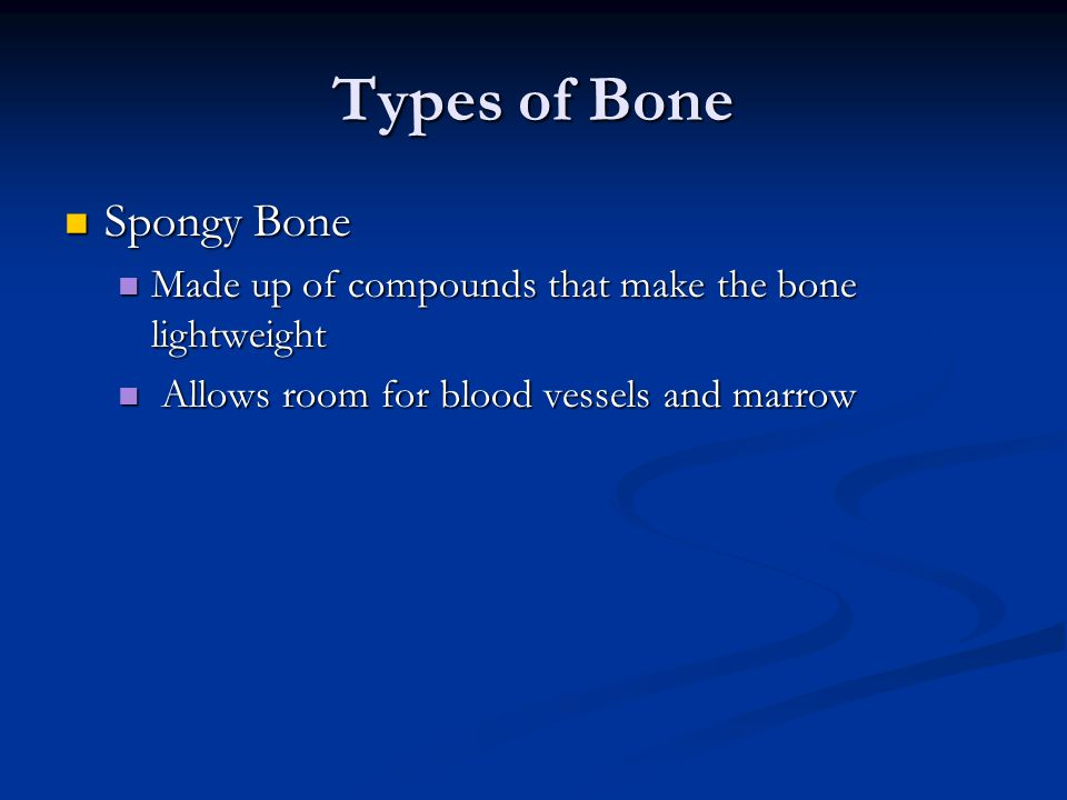 Types of Bone Spongy Bone