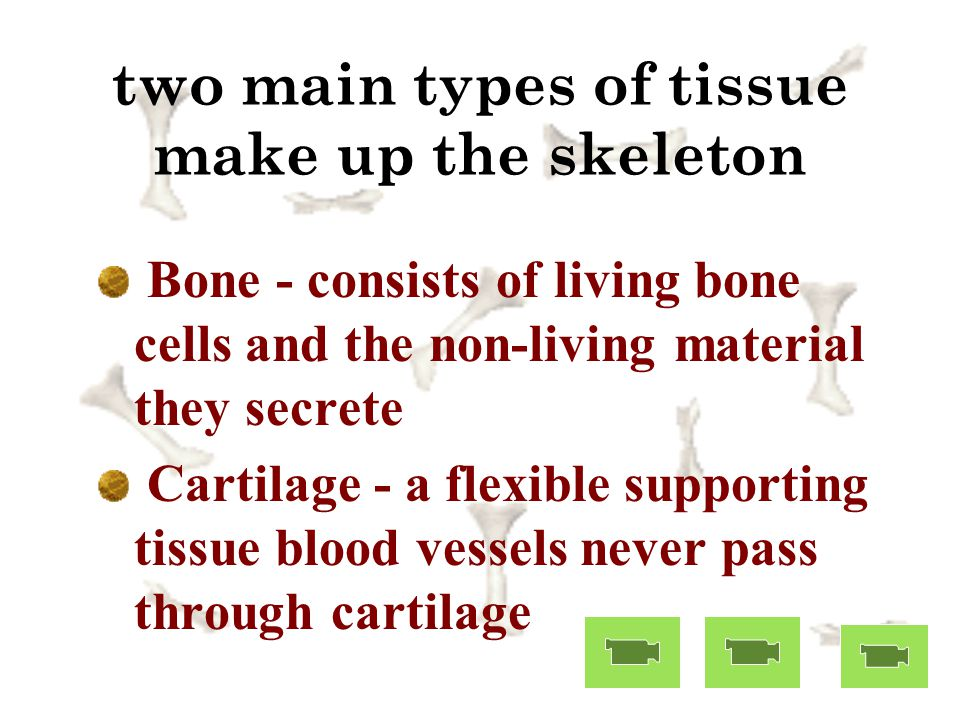 two main types of tissue make up the skeleton