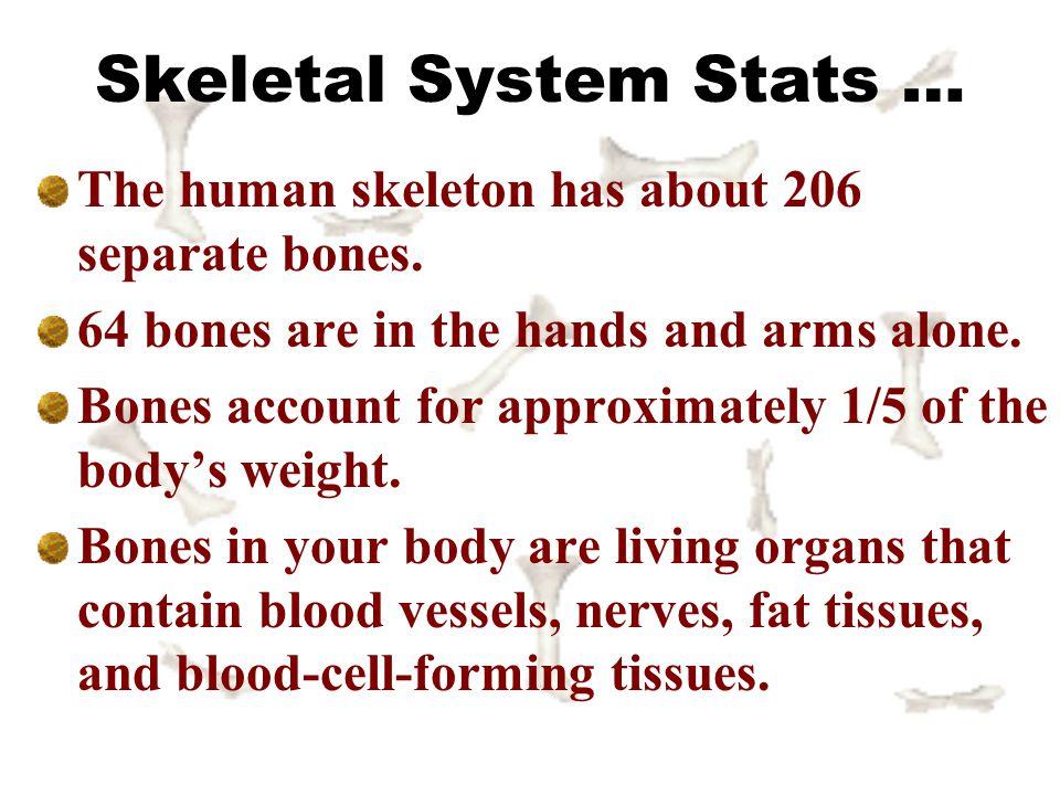 Skeletal System Stats …