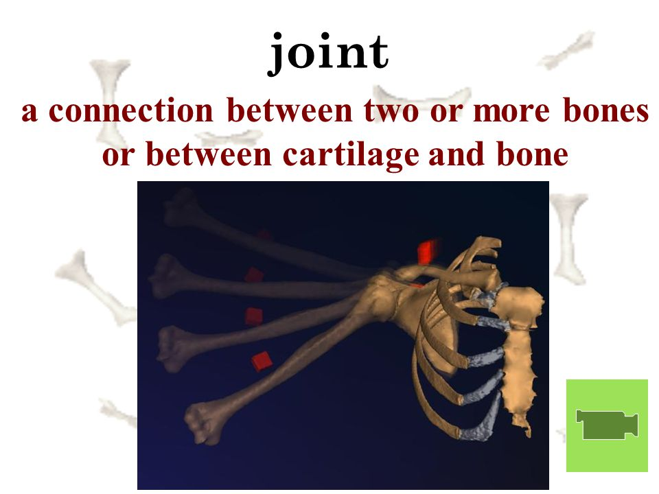 a connection between two or more bones or between cartilage and bone