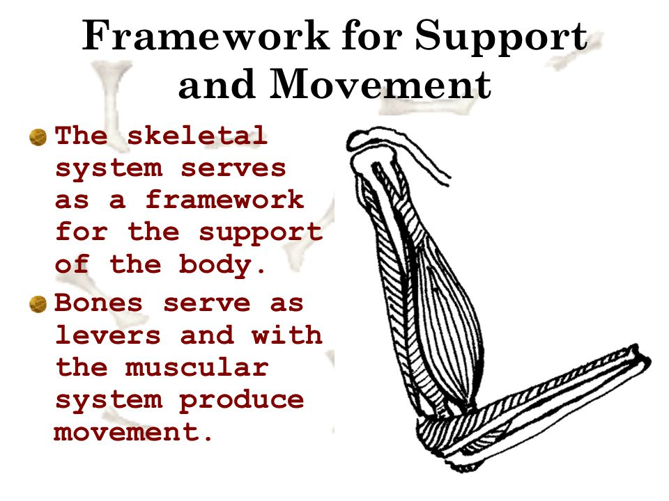 Framework for Support and Movement