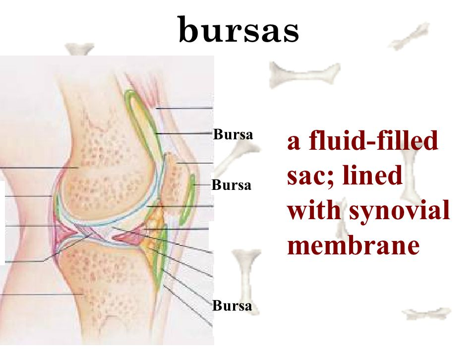 bursas a fluid-filled sac; lined with synovial membrane Bursa Bursa