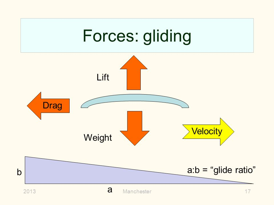 Forces: gliding Lift Drag Velocity Weight a:b = glide ratio b a 2013
