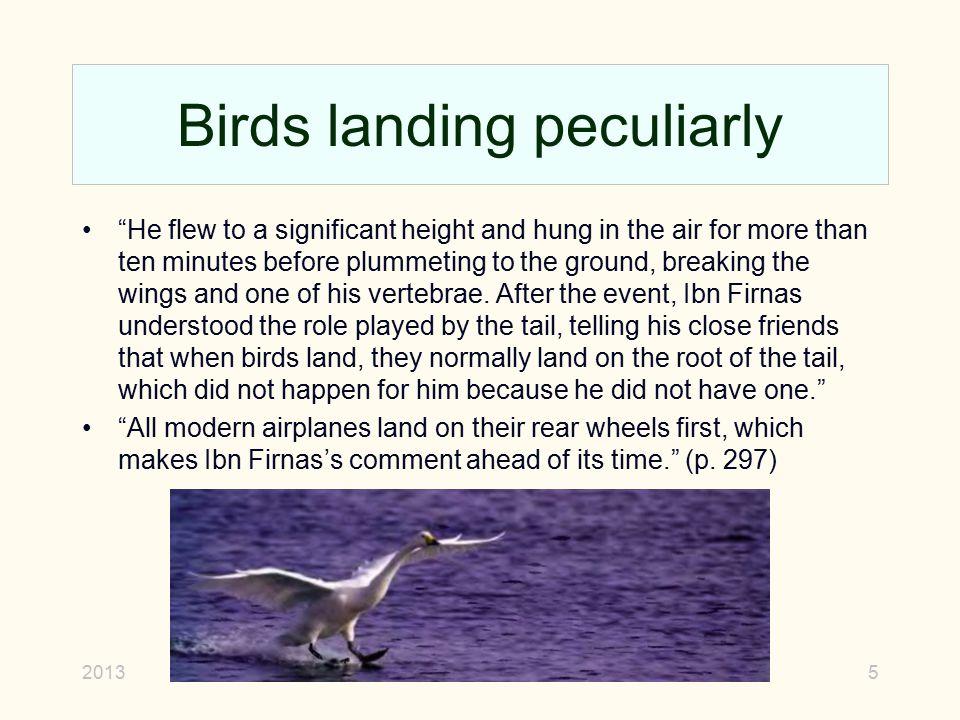 Birds landing peculiarly