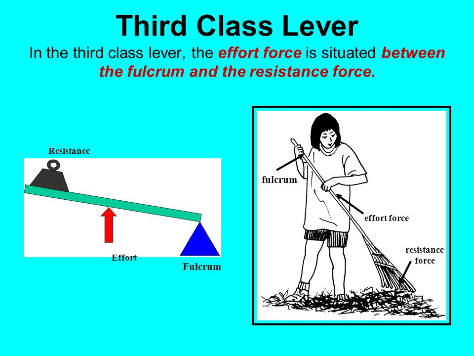 Third Class Lever In the third class lever, the effort force is situated between the fulcrum and the resistance force.