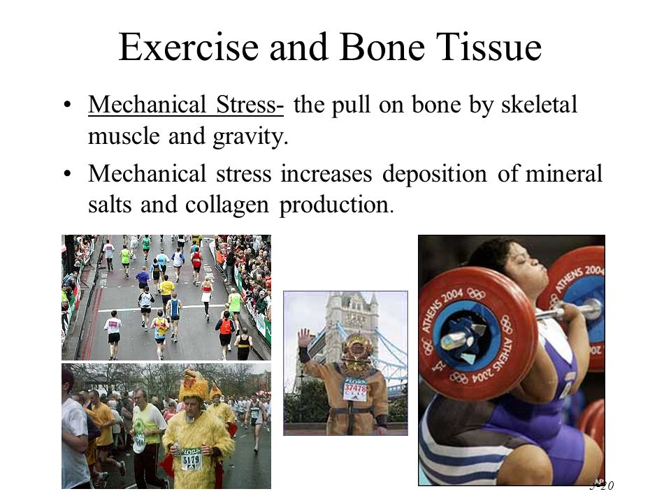 Exercise and Bone Tissue