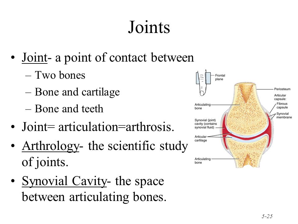 Joints Joint- a point of contact between